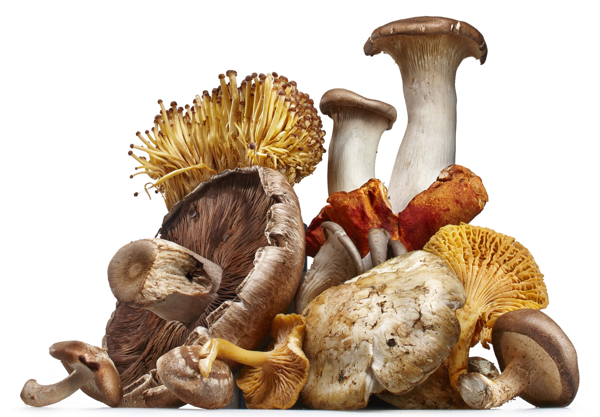 Mushrooms May Lower Prostate Cancer Risk - Renal and Urology News